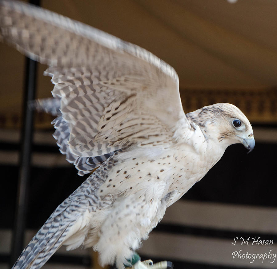 Bird Photograph by S M  Hasan