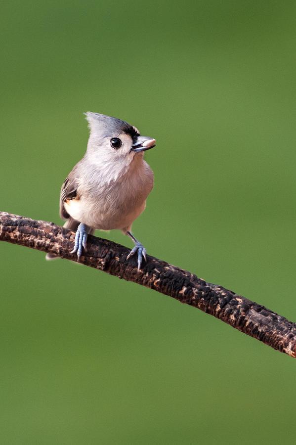Bird Photograph - Bird Seed by Paul Johnson