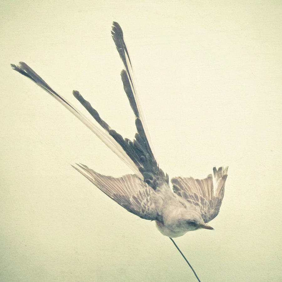 Wings Photograph - Bird Study No1 by Cassia Beck