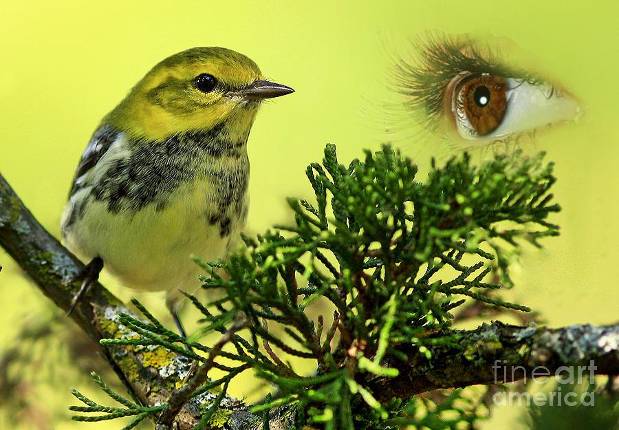 Bird Watching Photograph - Bird Watching by Inspired Nature Photography Fine Art Photography