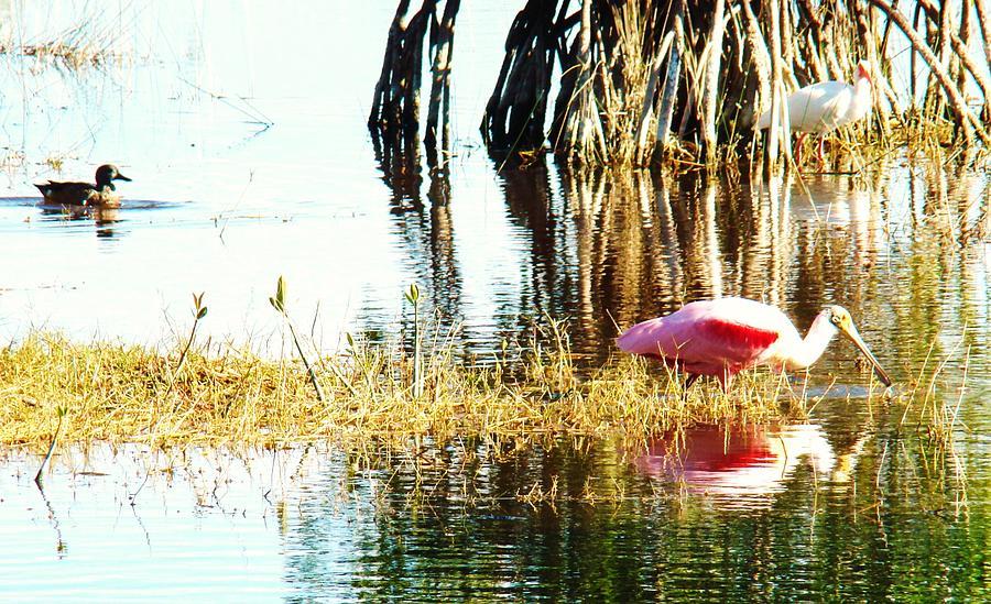 Seminole Photograph - Bird Watching by Van Ness