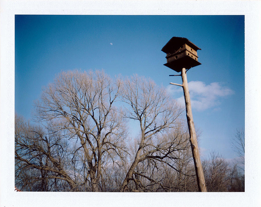 Polaroid Photograph - Birdhouse by Brady D Hebert