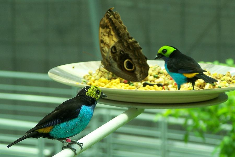 Birds And Butterfly Photograph by Dianne Stopponi