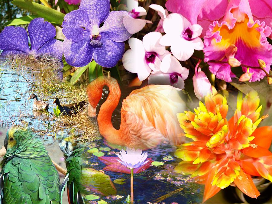 Seminole Photograph - Birds And Flowers by Van Ness