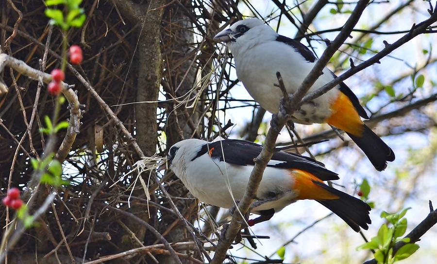 Birds and wildlife. Photograph by Pallavi Talukdar