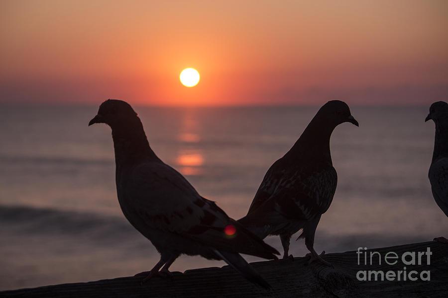 Birds At Sunrise Photograph