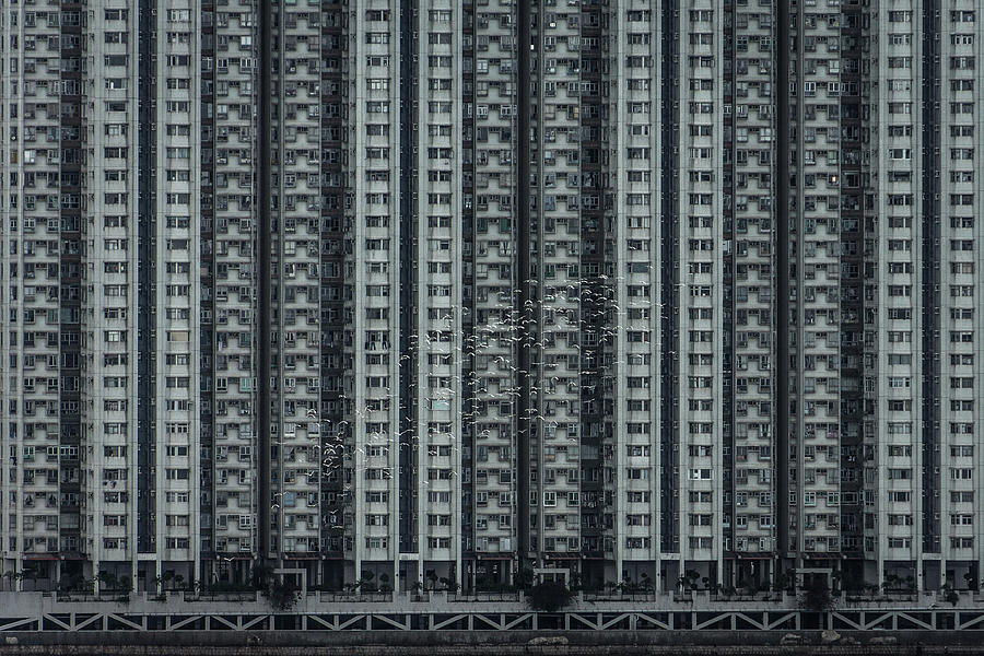 Birds Flying Against Dense Highrise Photograph by D3sign