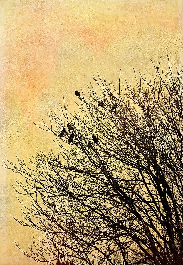 Birds Photograph - Birds by Gynt