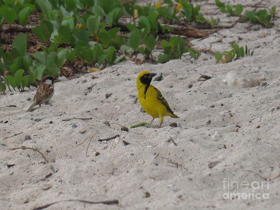Birds - Ile De La Reunion - Reunion Island Photograph by Francoise Leandre