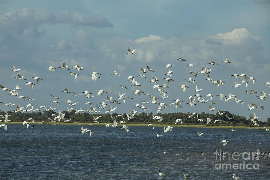 Birds Photograph - Birds In Flight by Patricia Hofmeester