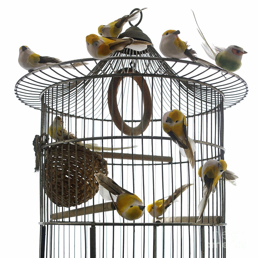 Freedom Photograph - Birds Inside And Outside A Cage by Bernard Jaubert