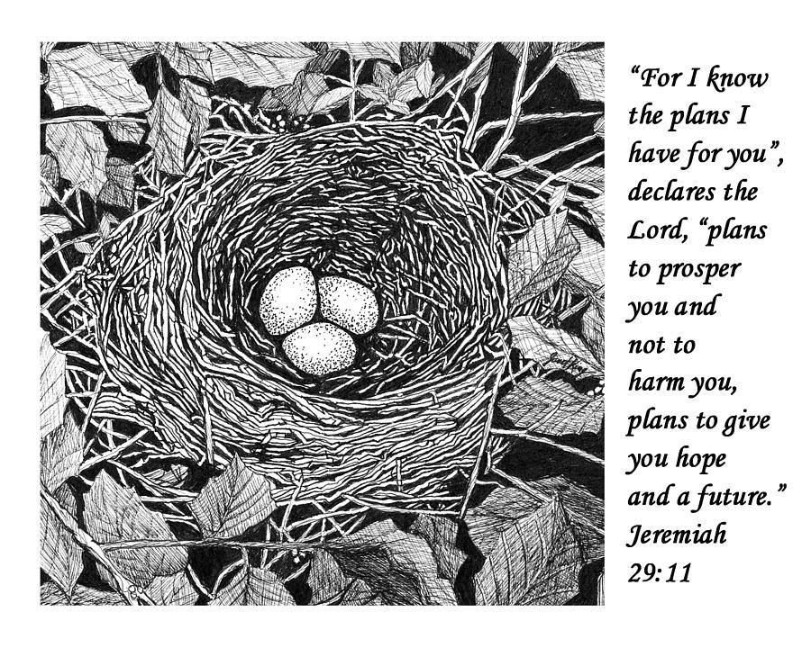 This is a picture of Astounding Bird In Nest Drawing