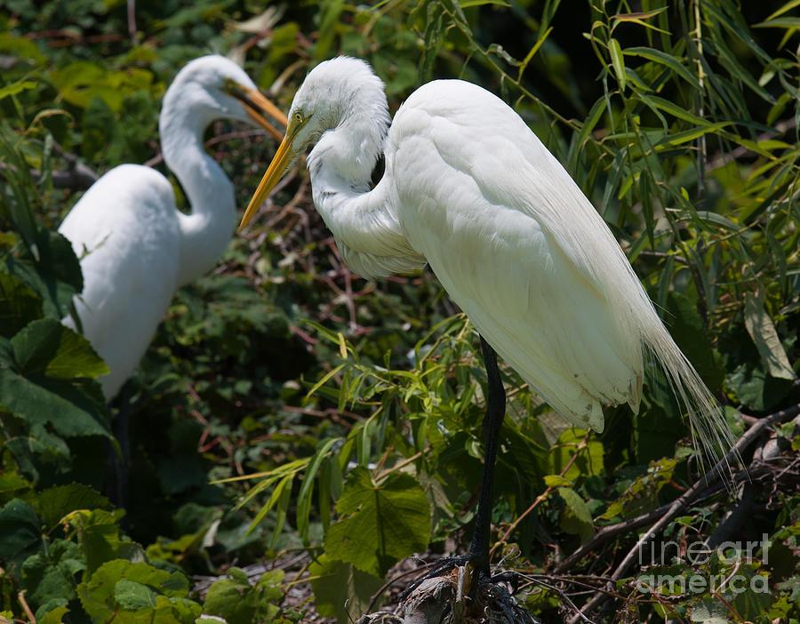 Birds Of A Feather Photograph