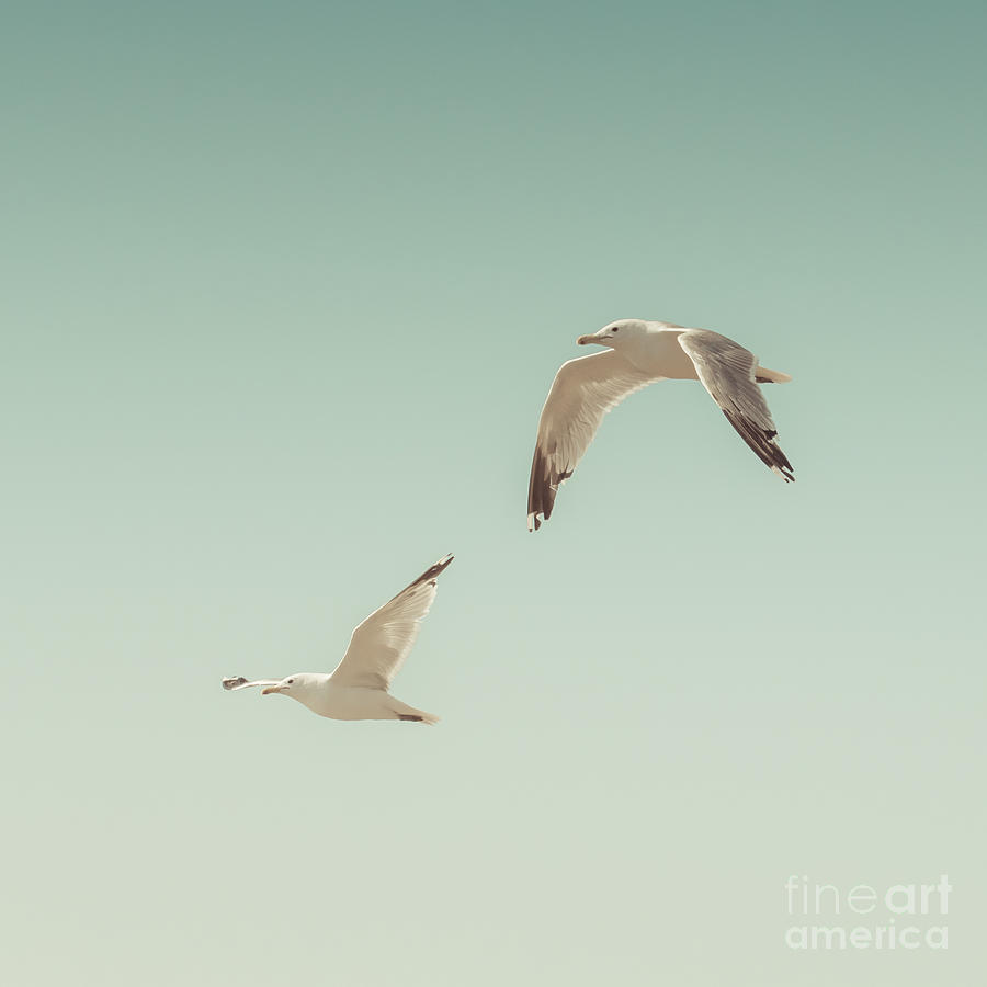 Photograph Photograph - Birds Of A Feather by Lucid Mood