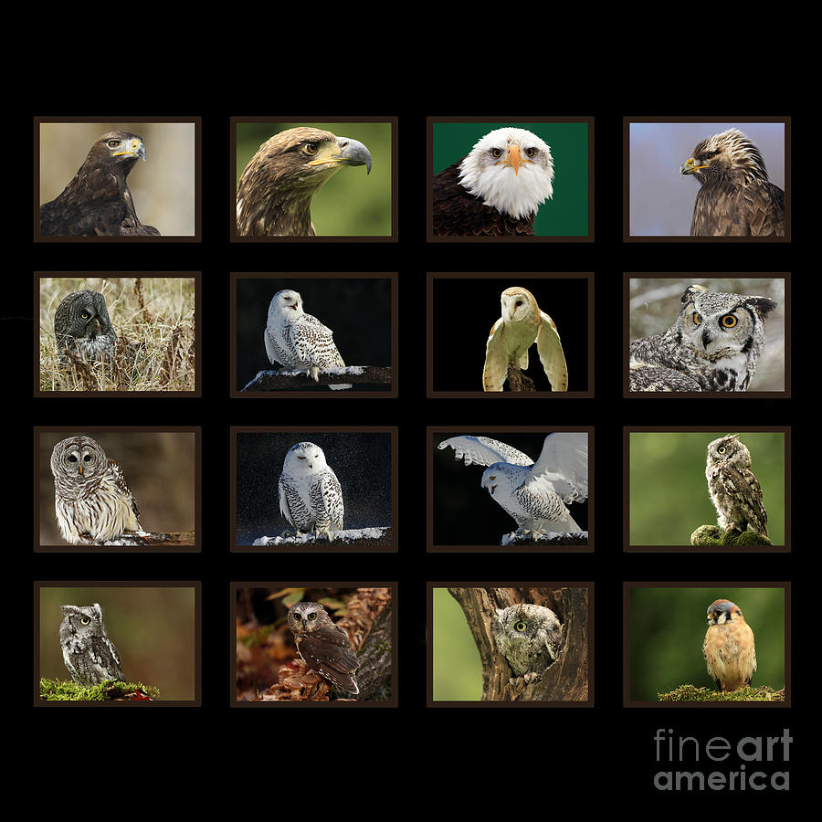 Birds Of Prey Photograph - Birds Of Prey Of Canada by Inspired Nature Photography Fine Art Photography