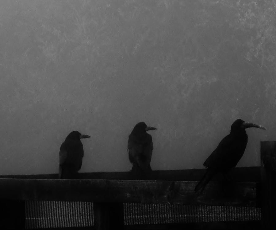 Fog Photograph - Birds On A Fence by Michelle ONeill