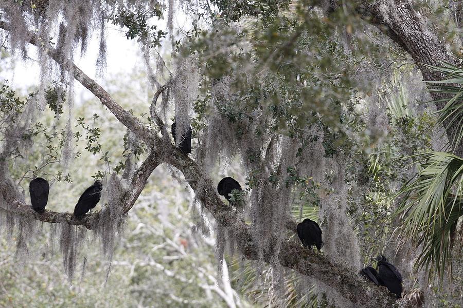 Birds Photograph - Birds On A Limb by Kimberly Oegerle