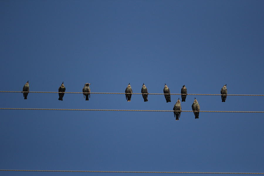 Bird Photograph - Birds On A Wire by April Wietrecki Green