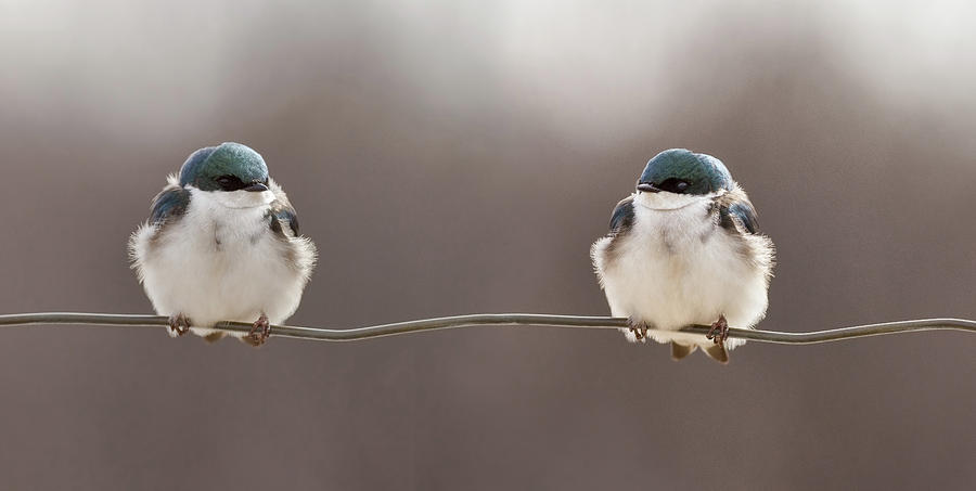 Animals Photograph - Birds On A Wire by Lucie Gagnon