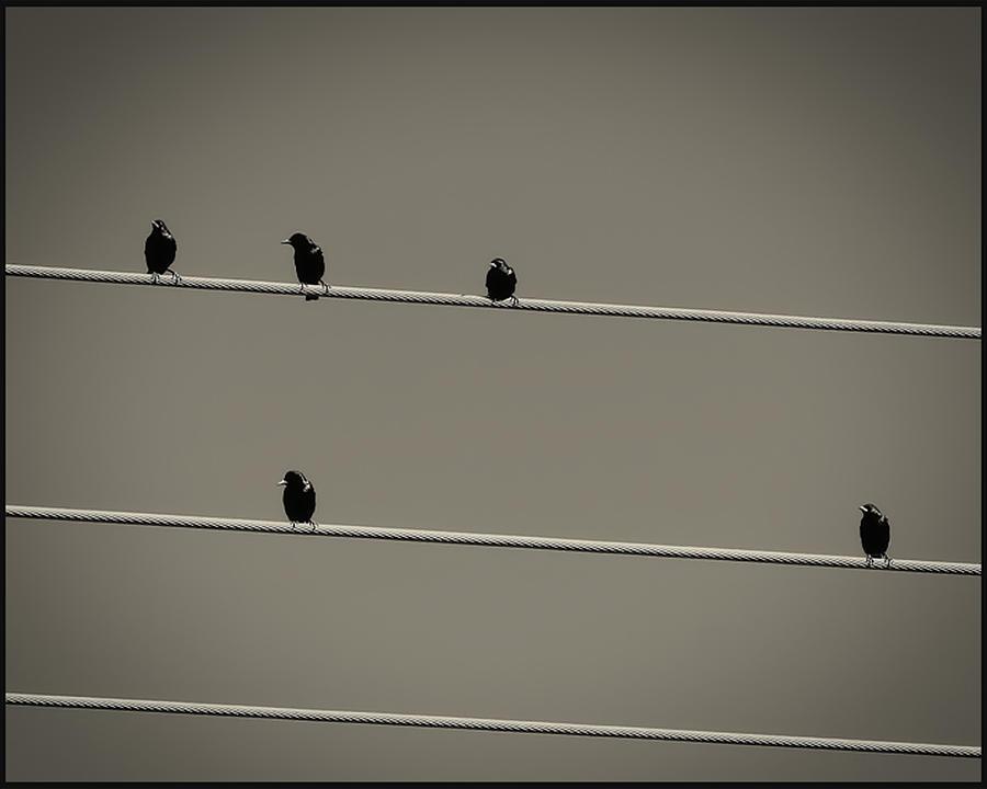 Bird Photograph - Birds On A Wire by Sherry Bowen