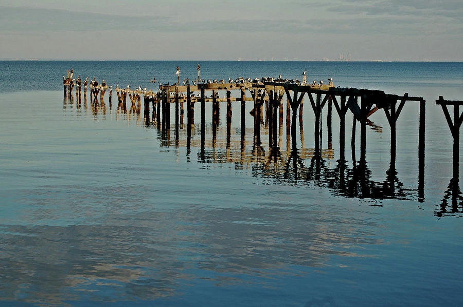 Pelican Painting - Birds On Old Dock On The Bay by Michael Thomas