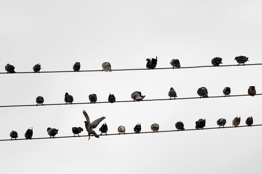 Birds Pattern Photograph by Ricardo Lima