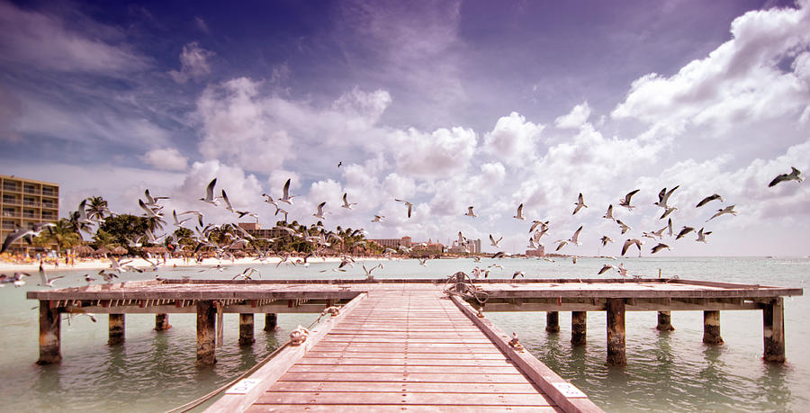 Birds Scatter Photograph by Photo By Dan Goldberger