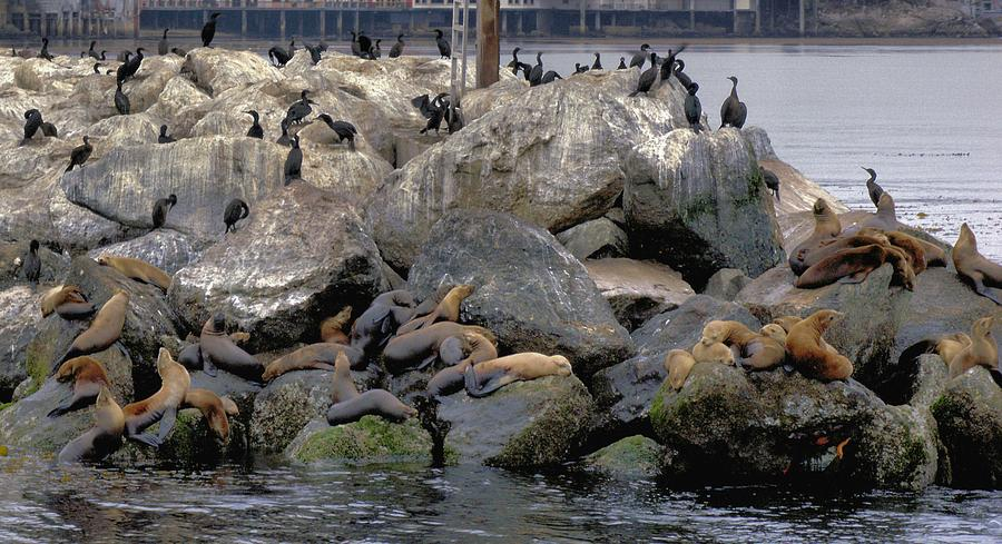Birds Photograph - Birds Seals And Sea Lions by Elery Oxford