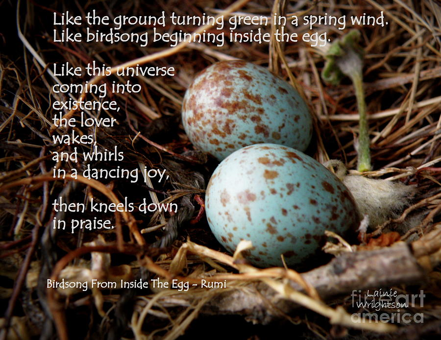 Eggs Photograph - Birdsong From Inside The Egg by Lainie Wrightson