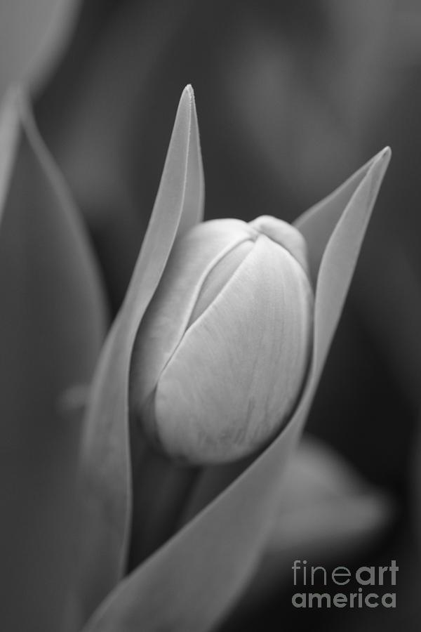 Flowers Photograph - Birth by Jeffery L Bowers