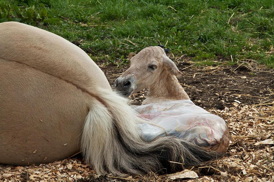 Birth Photograph - Birth by Odd Jeppesen