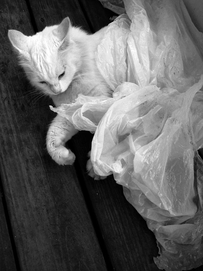 Cat Photograph - Birth Of The White Cat by Darryl  Kravitz