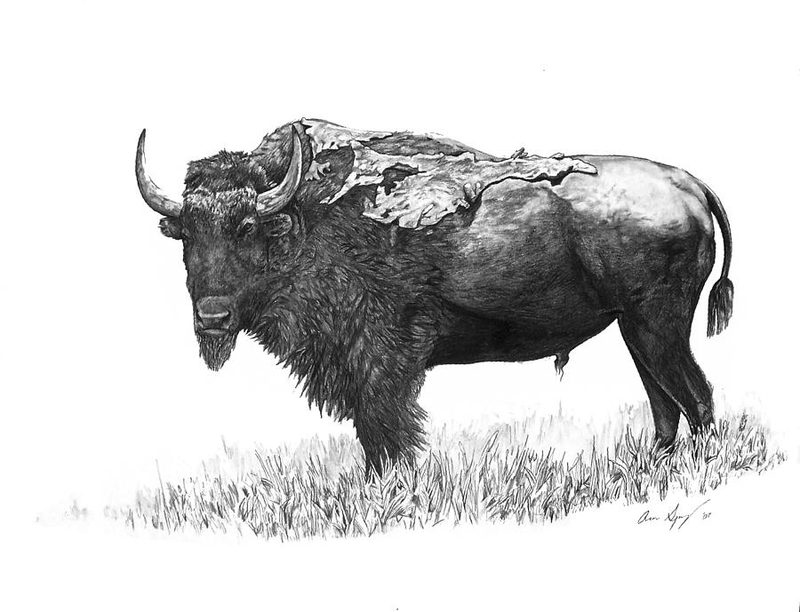 Bison Painting - Bison by Aaron Spong