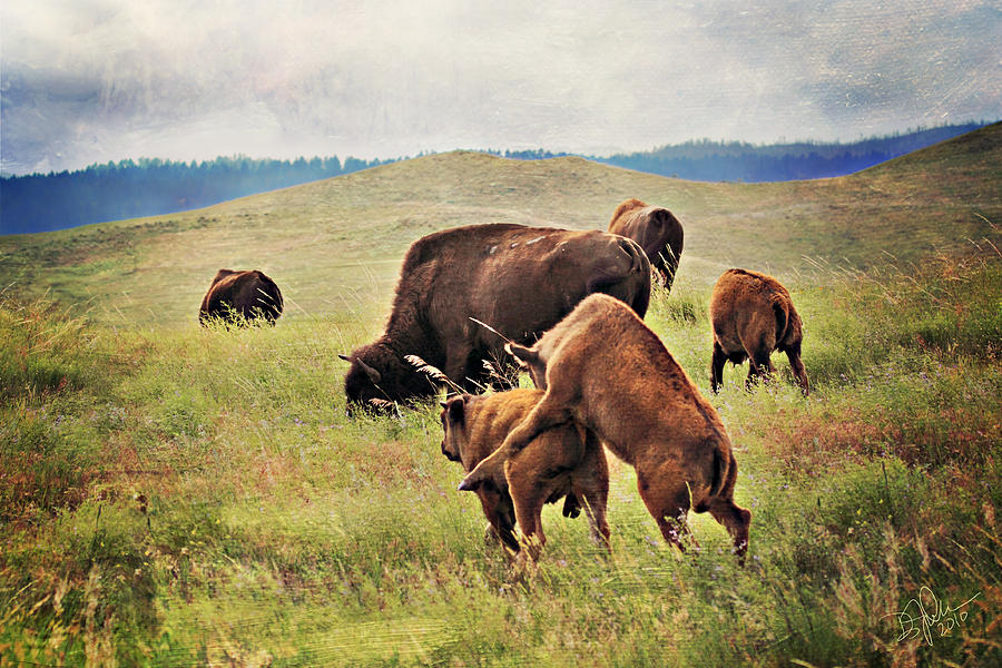 Bison Photograph - Bison Games by Deborah Johnson