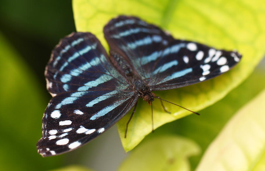 Nature Photograph - Black And Blue by Katherine White