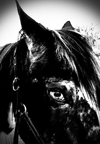 Horse Photograph - Black And White Baby by Chasity Johnson