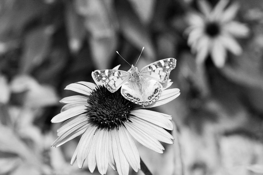 Black And White Photograph - Black And White Butterfly by Debbie Sikes