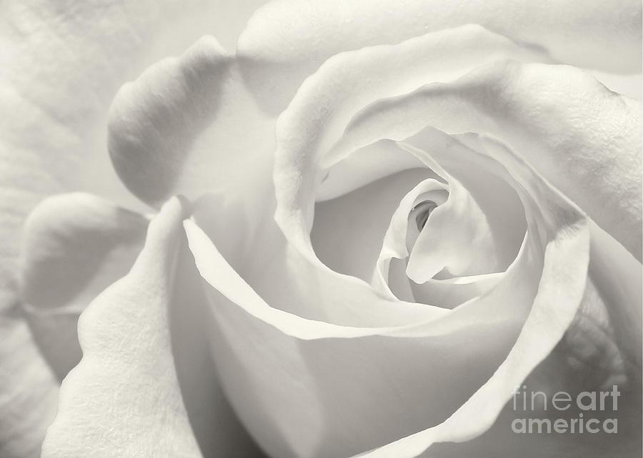 Macro Photograph - Black And White Curves by Sabrina L Ryan