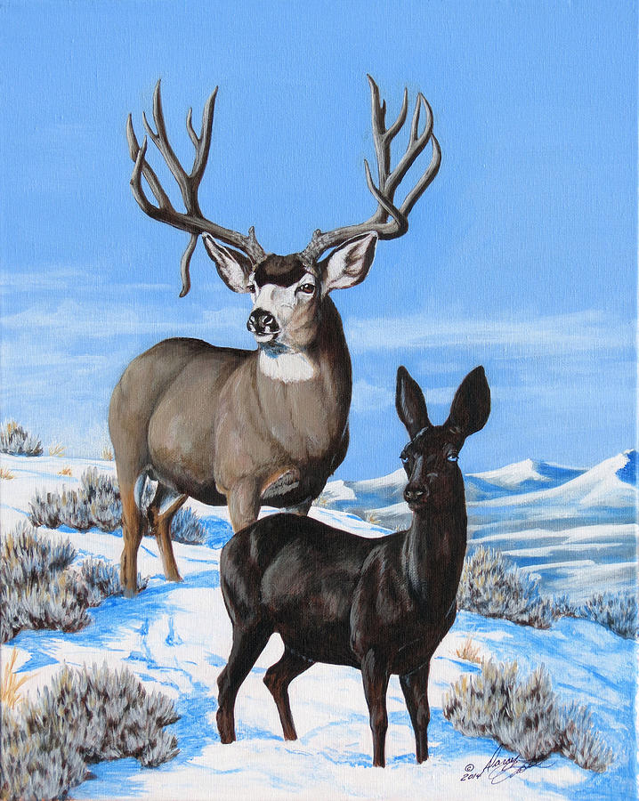Mule Deer Painting - Black And White by Darcy Tate
