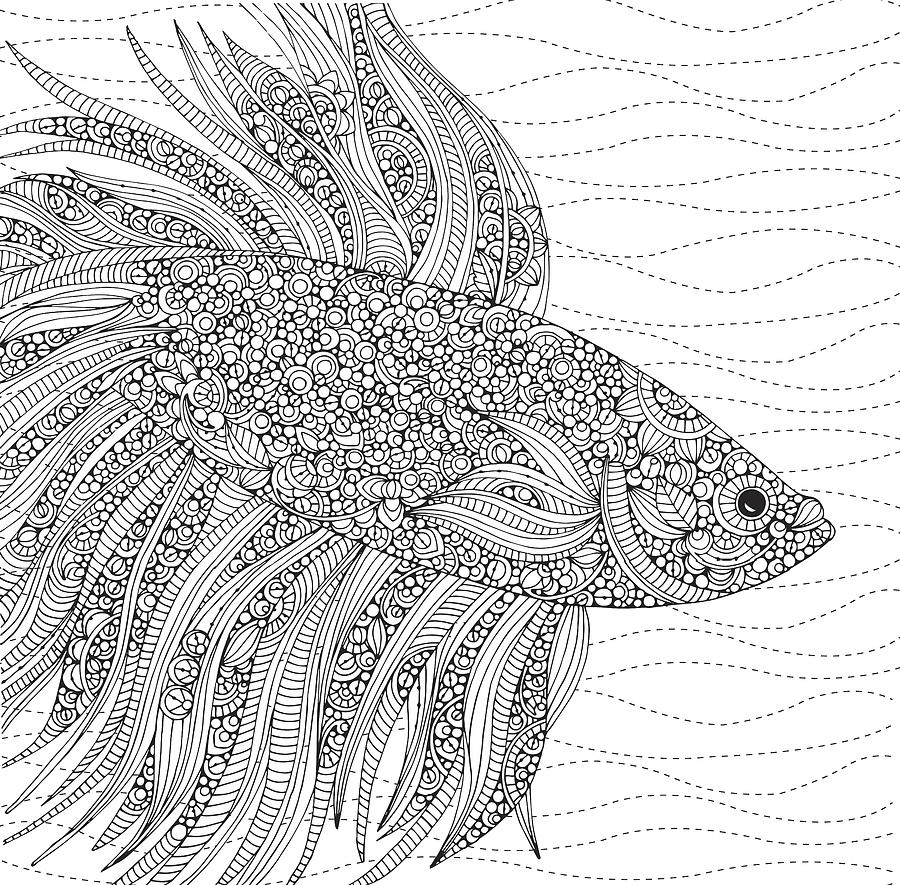 Valentina Drawing - Black And White Fish by MGL Meiklejohn Graphics Licensing