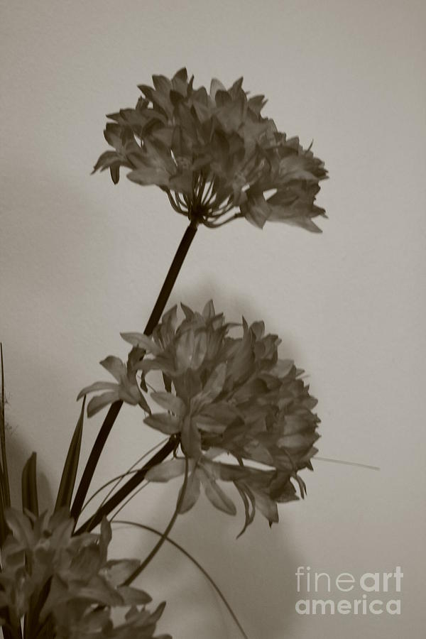 Flower Photograph - black and white Flower by Arelys Jimenez