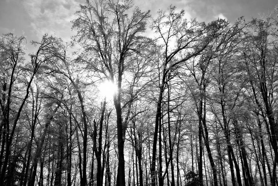 Snow Photograph - Black And White Forest by Dawdy Imagery