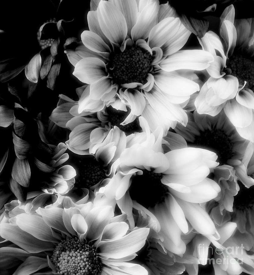 Black Photograph - Black And White by Kathleen Struckle