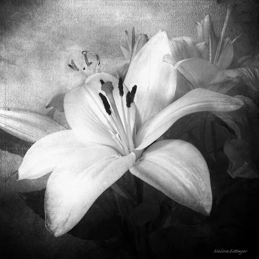 Black And White Lilies, Still Life Lily Flowers Photograph by ...