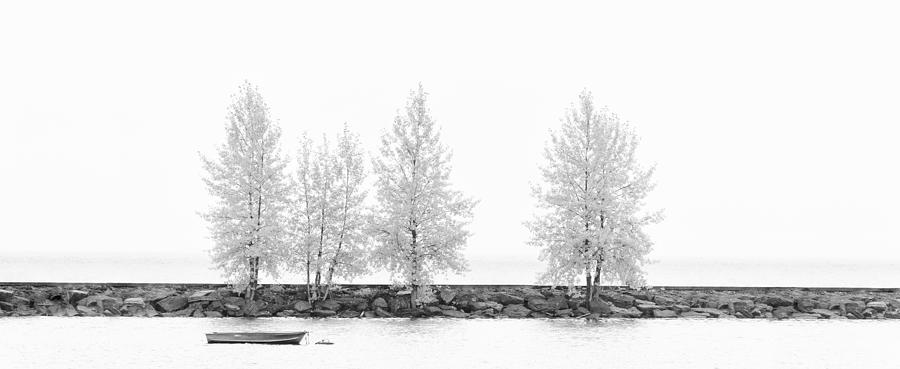 Water Photograph - Black And White Panorama Tree  by U Schade