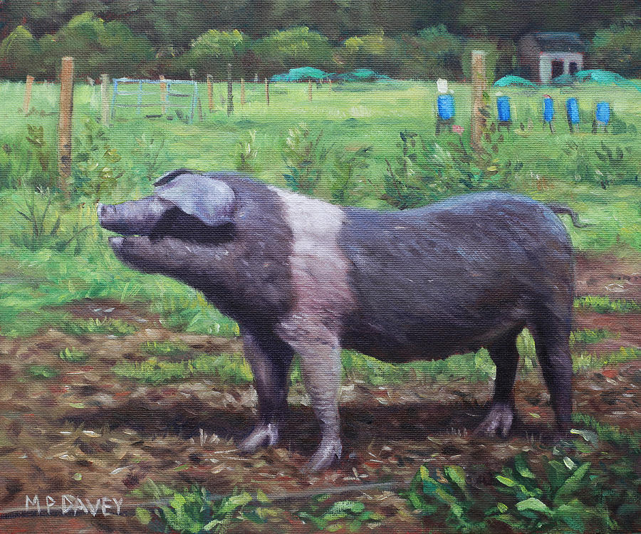 Pig Painting - Black And White Pig On Farm by Martin Davey