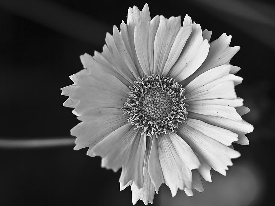 Black And White Photograph - Natures Wonder by Samantha Eisenhauer