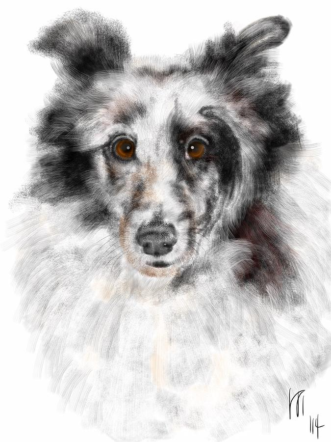 Canine Painting - Black and White Sheltie by Lois Ivancin Tavaf
