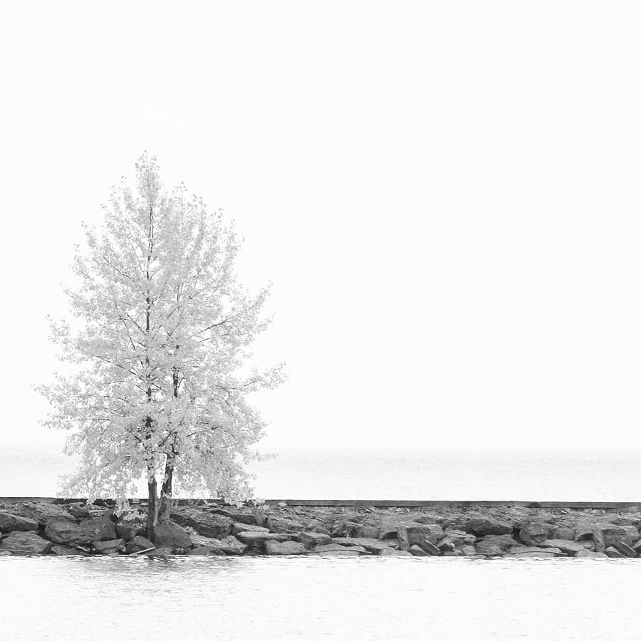 Autumn Photograph - Black And White Square Diptych Tree 12-7693 Set 2 Of 2 by U Schade