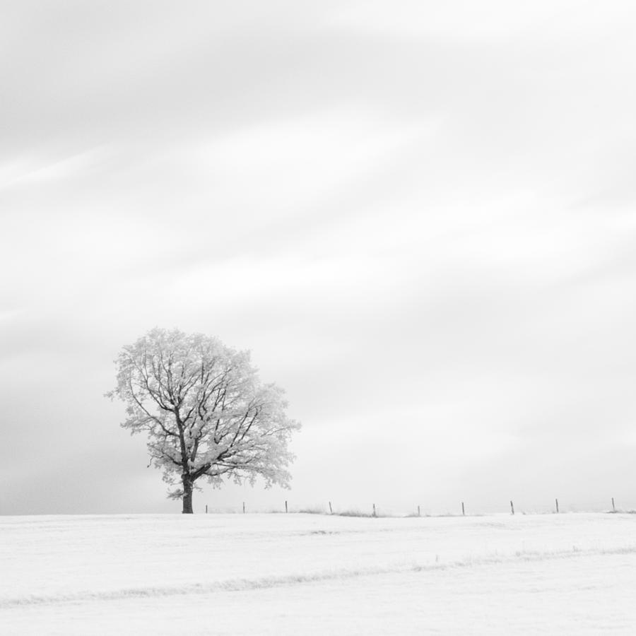 Autumn Photograph - Black And White Square Diptych Tree 13-0747 Set 1 Of 2 by U Schade